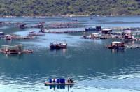 Hãy nêu ảnh hưởng của Biển Đông đến khí hậu, địa hình và các hệ sinh thái vùng ven biển nước ta.