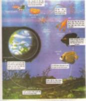 Câu 1, câu 2, câu 3, câu 4 trang 9 sinh học lớp 10