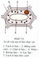 Bài 1, 2, 3 trang 25 SGK Sinh 6