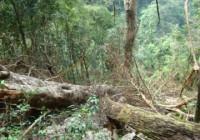Hãy nêu tình trạng suy thoái tài nguyên đất và các biện pháp bảo vệ đất ở vùng đồi núi và vùng đồng bằng.