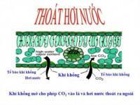 Lý thuyết Thoát hơi nước