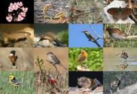 Sự suy giảm tính đa dạng sinh học của nước ta biểu hiện ở những mặt nào ?