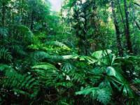Lý thuyết đặc điểm chung của thực vật