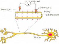 Lý thuyết Điện thế nghỉ