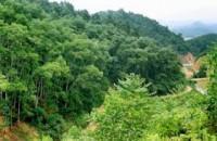Nhận xét sự biến động diện tích rừng qua các giai đoạn 1943-1983 và 1983-2005. Vì sao có sự biến động đó ?