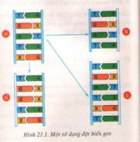 Đột biến gen là gì ?