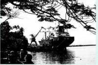 Tân Việt cách mạng Đảng (7-1928)