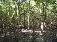 Nêu tình trạng suy giảm tài nguyên rừng và suy giảm đa dạng sinh học ở nước ta. Các biện pháp bảo vệ rừng và bảo vệ đa dạng sinh học.