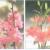 Bài 3 trang 56 SGK Công Nghệ 6